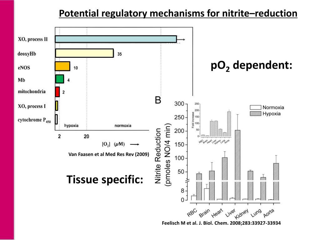 Potential regulatory mechanisms for nitrite–reduction