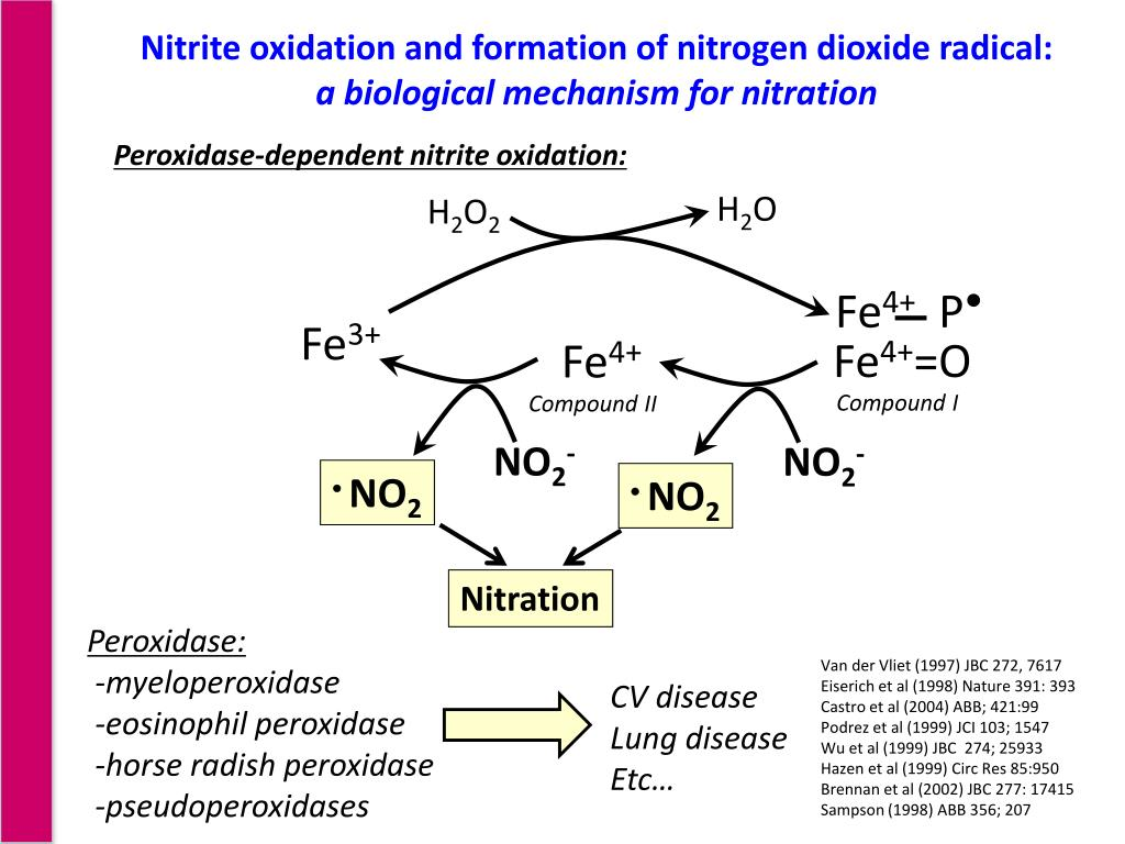 Nitrite oxidation and formation of nitrogen dioxide radical: