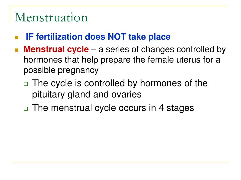 menstruation l.