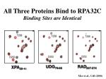 all three proteins bind to rpa32c binding sites are identical
