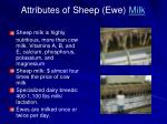 attributes of sheep ewe milk