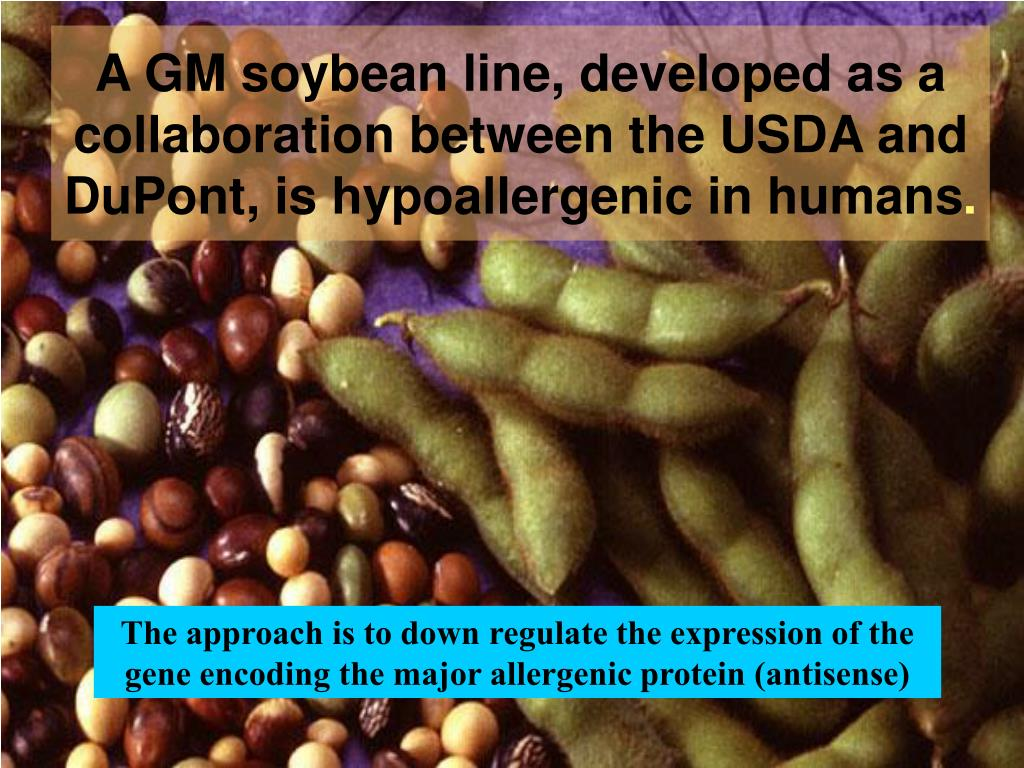 A GM soybean line, developed as a collaboration between the USDA and DuPont, is hypoallergenic in humans