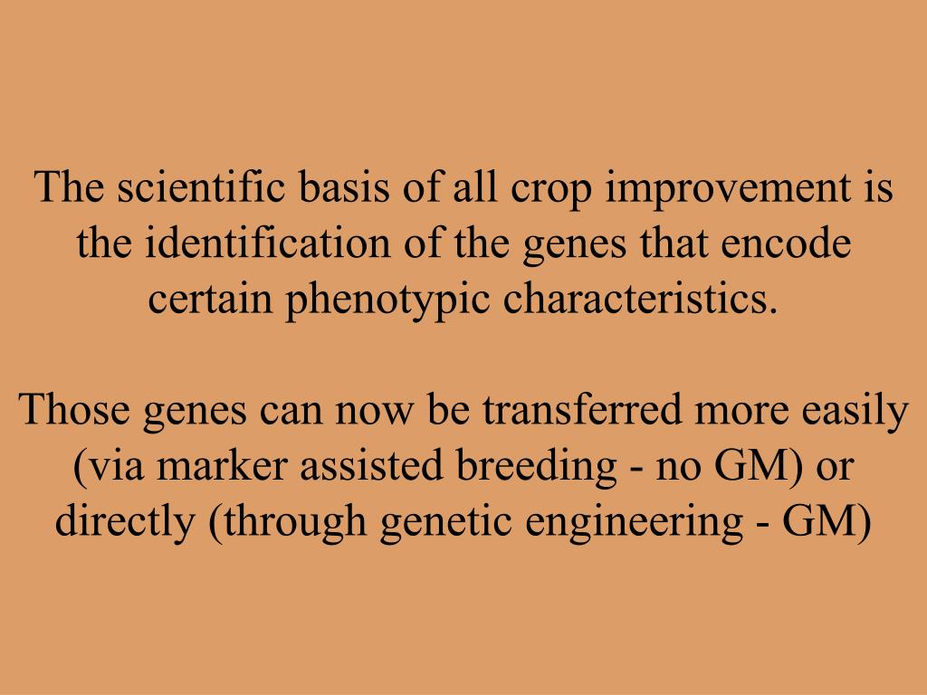 The scientific basis of all crop improvement is the identification of the genes that encode certain phenotypic characteristics.