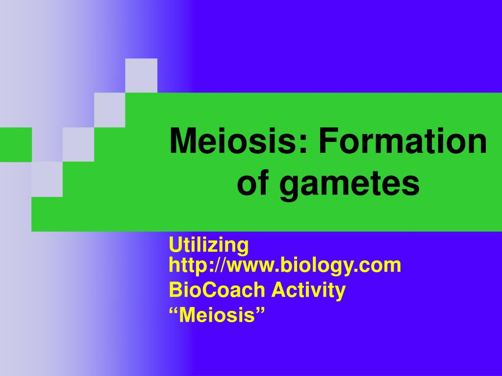 meiosis formation of gametes l.
