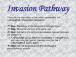 invasion pathway