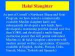 halal slaughter39