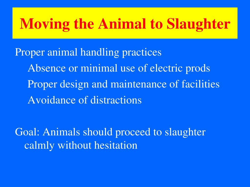 Moving the Animal to Slaughter