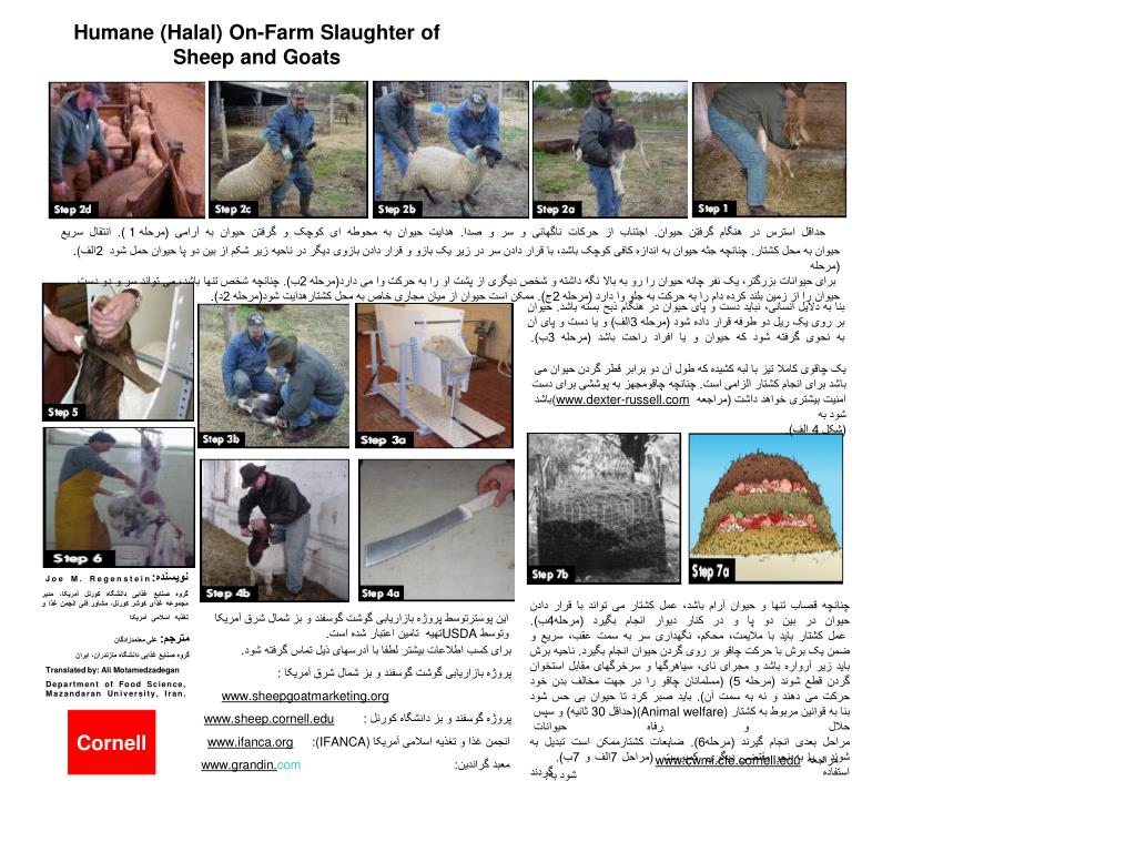 Humane (Halal) On-Farm Slaughter of            Sheep and Goats
