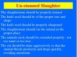 un stunned slaughter