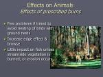 effects on animals effects of prescribed burns