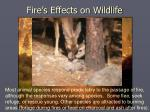 fire s effects on wildlife