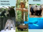 vertebrates12