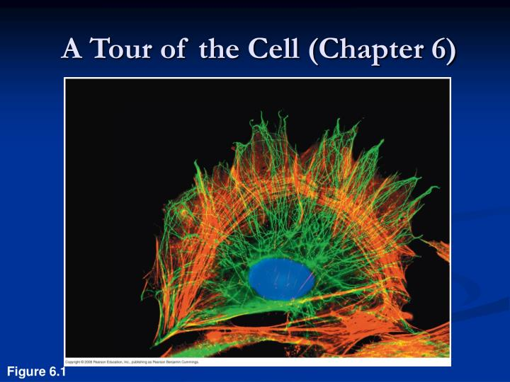 a tour of the cell chapter 6 n.