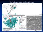 golgi apparatus functions
