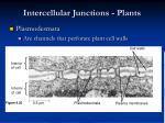 intercellular junctions plants