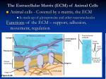 the extracellular matrix ecm of animal cells