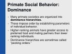 primate social behavior dominance