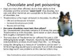 chocolate and pet poisoning
