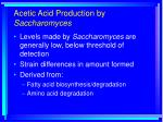 acetic acid production by saccharomyces