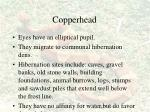 copperhead52