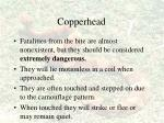 copperhead53