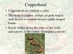 copperhead55