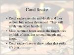 coral snake58
