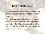 timber rattlesnake44