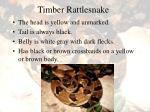 timber rattlesnake46