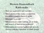 western diamondback rattlesnake35