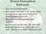 western diamondback rattlesnake36