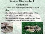 western diamondback rattlesnake37