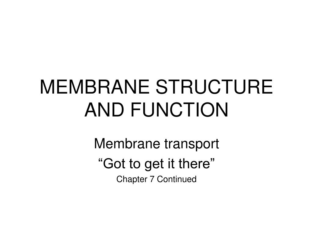 membrane structure and function l.