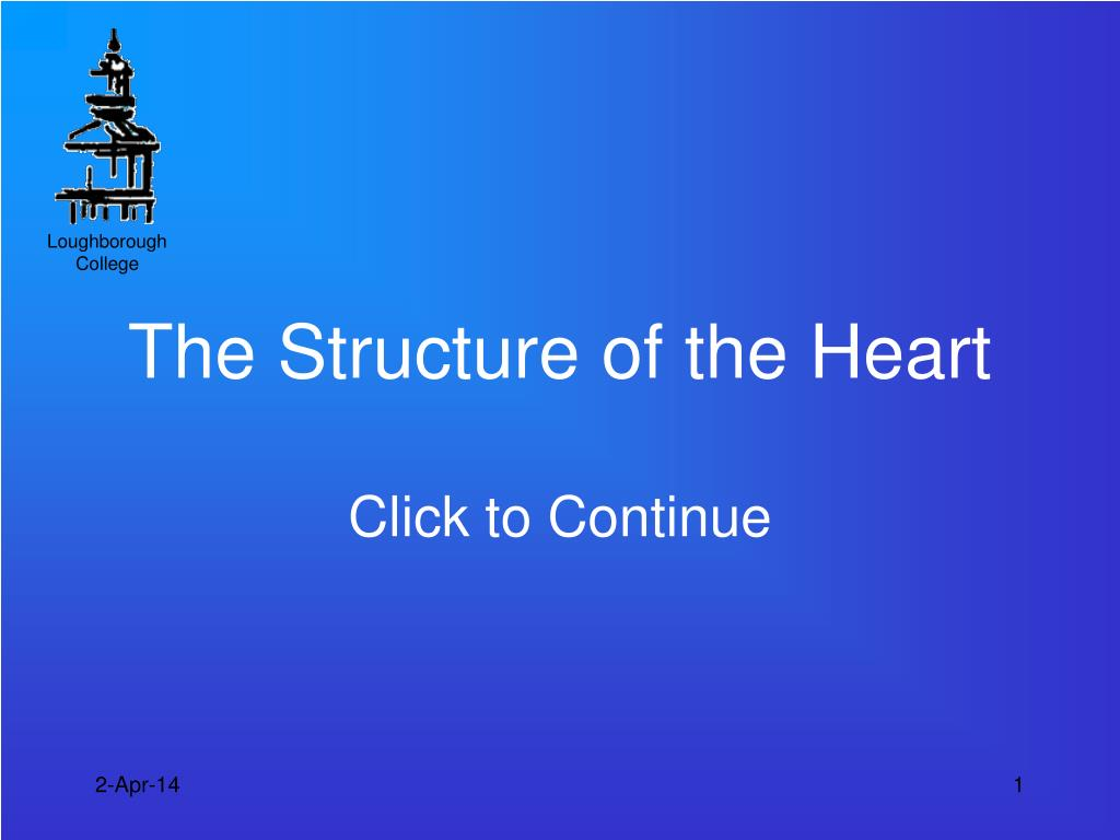 the structure of the heart l.