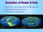 evolution of flower fruit