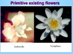 primitive existing flowers