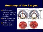 anatomy of the larynx11