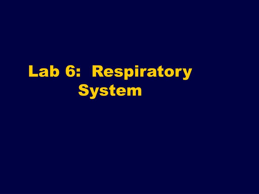 lab 6 respiratory system l.