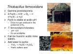 thiobacillus ferrooxidans