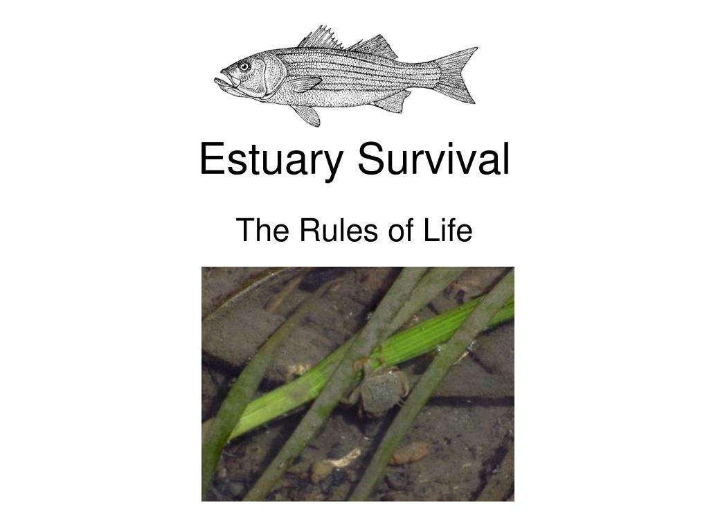 estuary survival l.