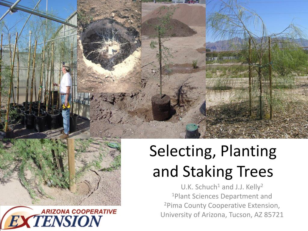 selecting planting and staking trees l.