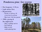 ponderosa pine fire regime