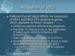 activation of hes