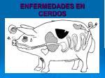 enfermedades en cerdos