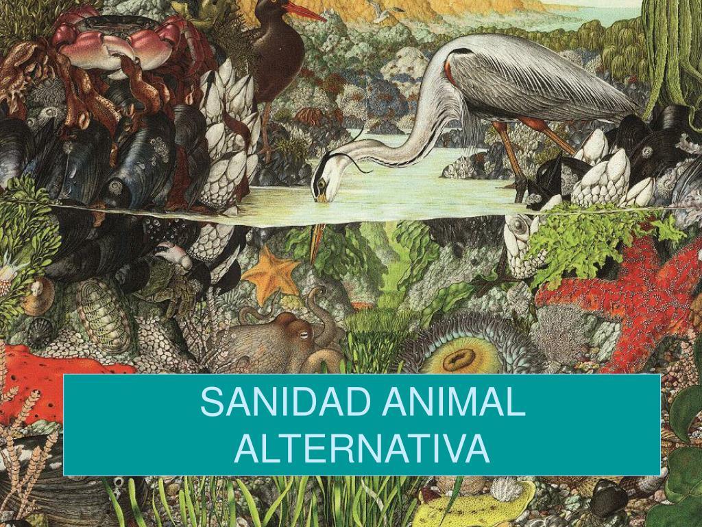 sanidad animal alternativa l.