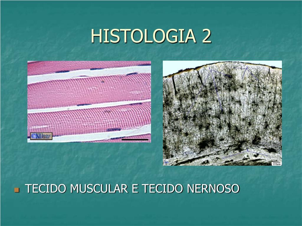 histologia 2 l.