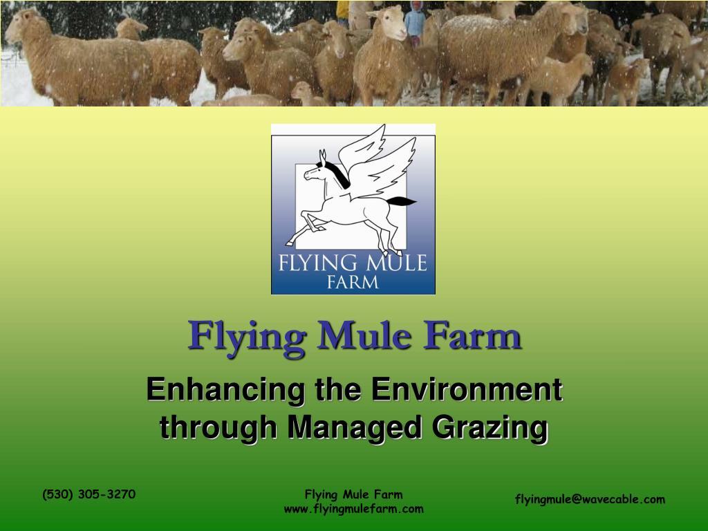 flying mule farm l.