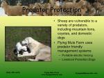 predator protection