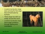 predator protection17