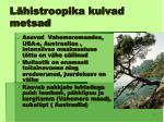 l histroopika kuivad metsad